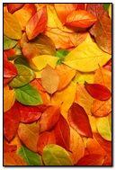 Fall (6543)
